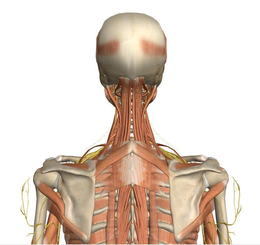 Laurel Black Music Marimba Body Back Muscles