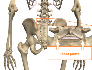 Facet joint lumbar spine