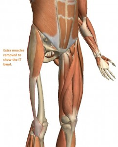 The TFL muscle (outlined in red) runs from the hip to the knee, along the outside of the thigh.